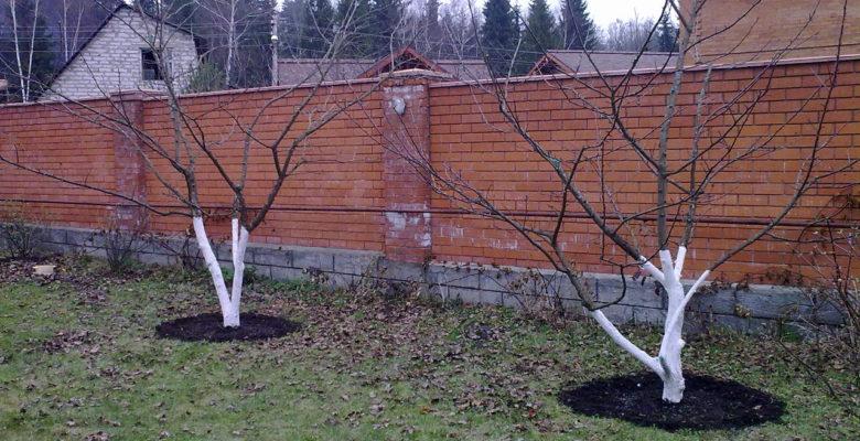 Как удобрять плодоносящие деревья