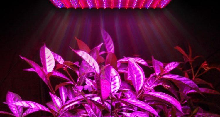 Лампа LED для растений