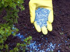 Как и когда вносить минеральные удобрения?