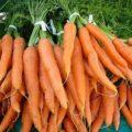 Храним морковь правильно