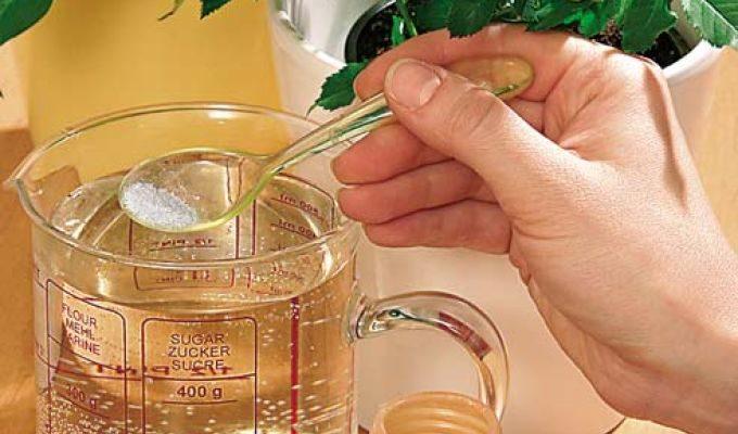 Способы подкормки домашних растений