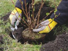 При посадке дерева используем земляные смеси
