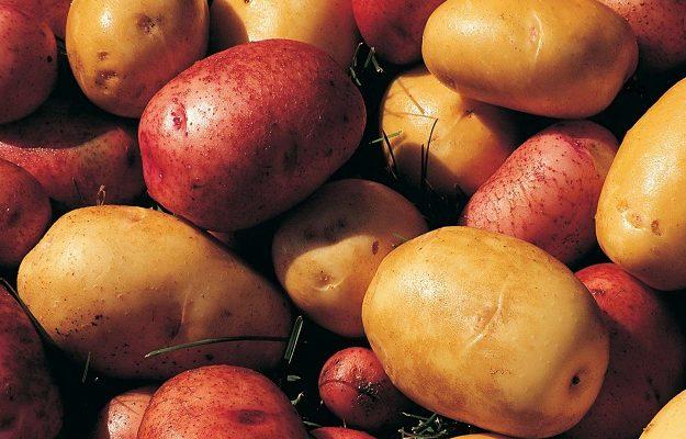 Сорта раннего картофеля