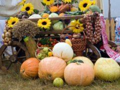 Дачный календарь: что и когда делать в вашем саду