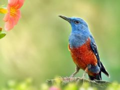 Птицы в саду и на даче