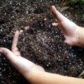 Какой должна быть оптимальная почва