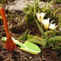Что сделать на участке в первую очередь в начале весны?