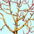 Обрезание деревьев своими руками, как залог их здоровья
