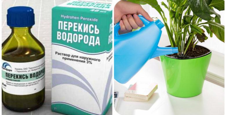 Полив и подкормка перекисью водорода