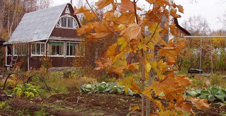 Что сажать осенью