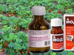 Подкормка клубники йодом и борной кислотой